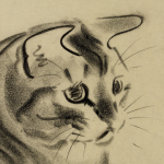 Cat illustration, Charcoal, Clare Turnlay Newberry